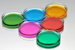 Petri dishes with color liquid. On a gray background Royalty Free Stock Photos