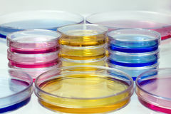 Petri dishes with colored fluids Royalty Free Stock Images