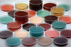 Petri dishes with culture medium Royalty Free Stock Photos