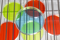 Petri Dishes In Incubator Royalty Free Stock Image