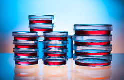 Petri dishes in the laboratory Royalty Free Stock Photo