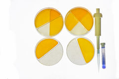 Petri dishes medical research Stock Photos
