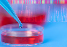 Petri dishes and micropipette. Pathogens test Royalty Free Stock Photography
