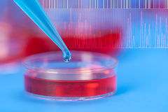 Petri dishes micropipette, pathogens test Stock Image