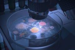 Petri naczynia bakterie Zdjęcia Royalty Free