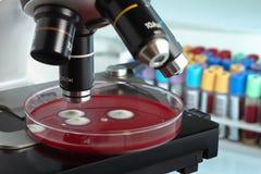 Petri-plaat onder in de laboratoriummicroscoop met buizen in bac Royalty-vrije Stock Foto's