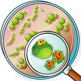 Petri plate and magnifier Stock Photography