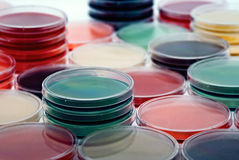 Petri plates collection Royalty Free Stock Photos