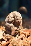 Petrifacted egg of dinosaur Stock Image
