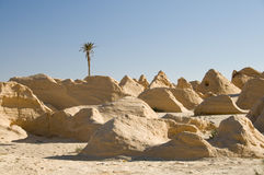 petrified дюны Стоковые Изображения RF
