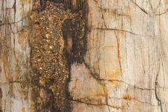 Petrified ancient wood changing into stone by nature Stock Image