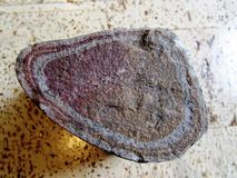 Petrified bone?. Petrified bone (maybe) found at Cypress Hills Saskatchewan Royalty Free Stock Photos