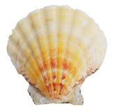 Petrified door ocean seashells Royalty Free Stock Photo