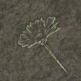 Petrified flower Stock Image