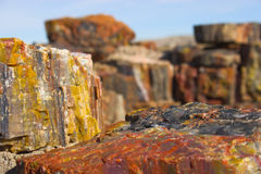 Free Petrified Forest Royalty Free Stock Image - 3455616