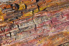 Free Petrified Forest Royalty Free Stock Images - 3496909