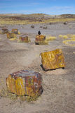Petrified forest Stock Image