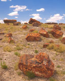 Petrified Forest. Petrified wood scattered across a hill in the Petrified Forest, Arizona, USA Royalty Free Stock Photos