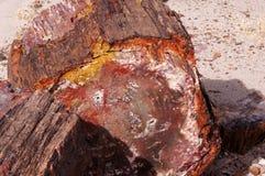 Petrified Forest, Arizona, USA Stock Images