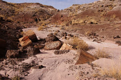 Petrified Forest, Arizona, USA Royalty Free Stock Images