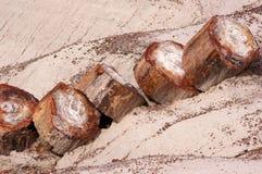 Petrified Forest, Arizona, USA Royalty Free Stock Photography