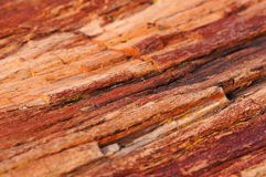 Petrified Forest, Arizona, USA Royalty Free Stock Photography
