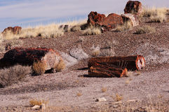 Petrified Forest, Arizona, USA Stock Images