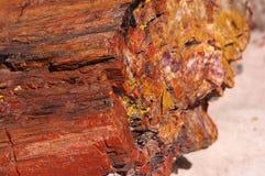Petrified Forest, Arizona, USA Stock Image