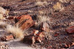 Petrified Forest, Arizona, USA Stock Photos