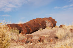 Petrified Forest, Arizona, USA Royalty Free Stock Photo