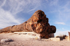 Petrified Forest, Arizona, USA Stock Photo