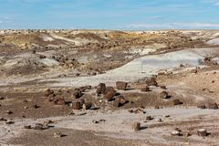 Petrified forest Arizona stock photography