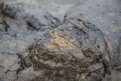 Petrified Forest  at Curio bay. Catlins New Zealand Royalty Free Stock Images