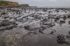 Petrified Forest  at Curio bay. Catlins New Zealand Royalty Free Stock Photo