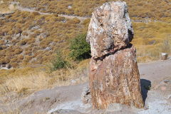 Petrified forest,lesbos Stock Photo