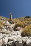 Petrified forest of Lesvos in Greece. In summer royalty free stock images