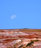Petrified Forest and Moon Royalty Free Stock Photos