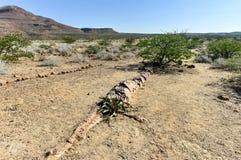 Petrified Forest, Namibia Royalty Free Stock Photos