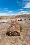 Petrified Forest National Monument Stock Image