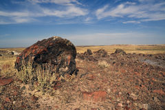 Petrified Forest National Park Royalty Free Stock Photography