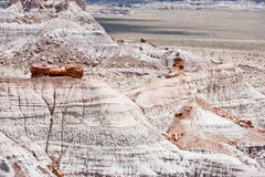 Petrified Forest National Park Stock Photos