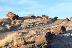 Free Petrified Forest National Park Royalty Free Stock Photos - 31148288