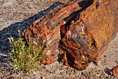 Petrified Forest National Park, Arizona. Stock Photos