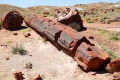 Petrified Forest. National Park in Arizona Stock Photo