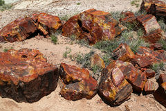 Petrified Forest. National Park in Arizona Royalty Free Stock Image