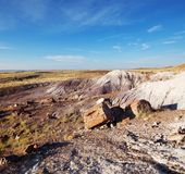 Petrified forest Royalty Free Stock Image