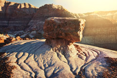 Petrified forest Stock Images