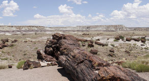 Petrified Forest National Park Stock Images