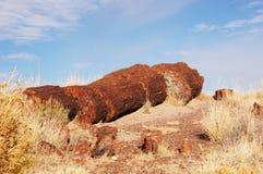 Petrified-Forest-National-Park, Arizona, USA Stock Photo