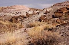 Petrified-Forest-National-Park, Arizona, USA Royalty Free Stock Images